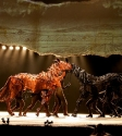 War Horse: Photo By Ros O'Gorman